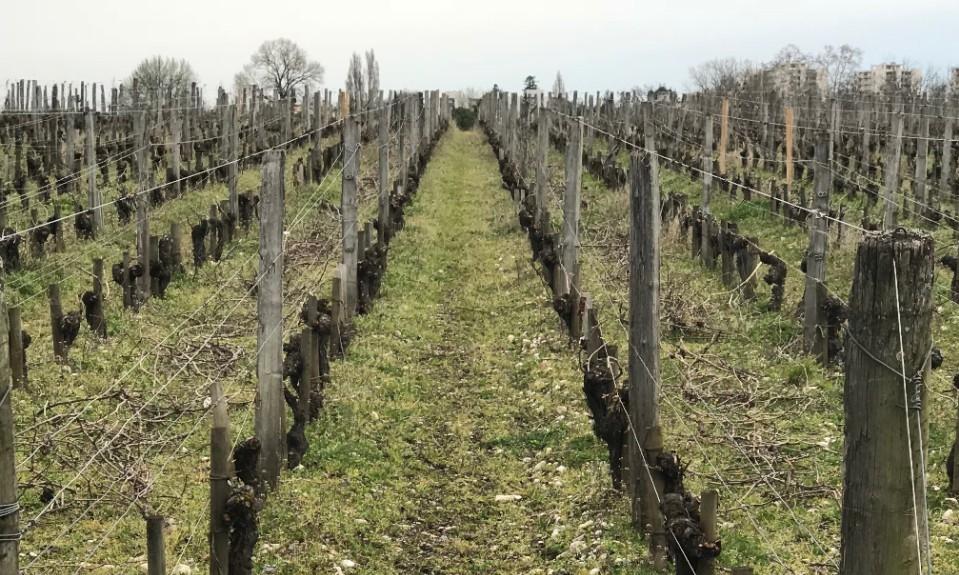The University of Bordeaux vineyards