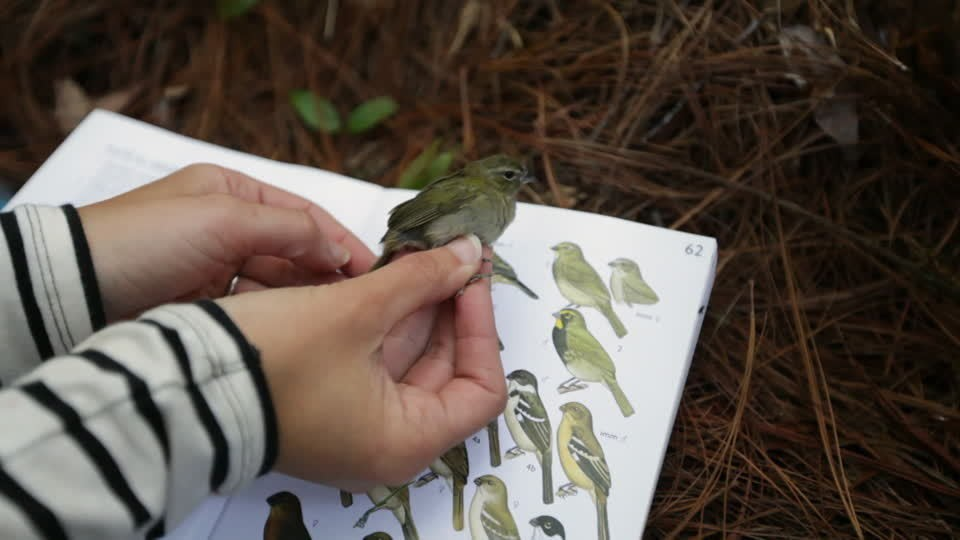 image of hands holding a small green bird in front of a book with pages showing the same bird